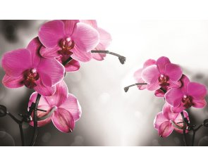 Poszter tapéta Orchid in grey background